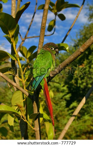 green bird in tree - stock photo
