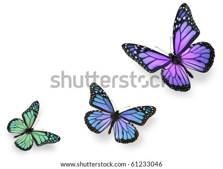 Green blue and purple butterflies isolated on white - stock photo