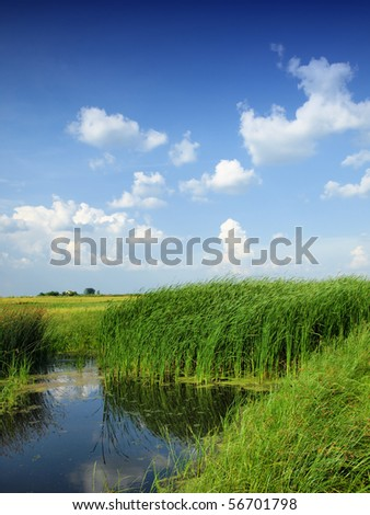 Green bog - stock photo