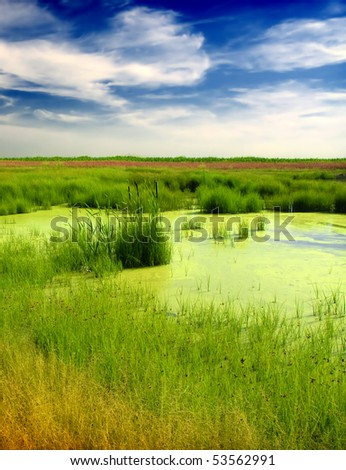 Green bog and clouds - stock photo