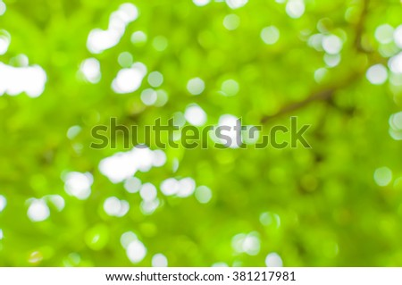 Green bokeh background of foliage. Nature composition.