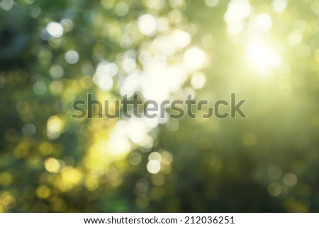 green bokeh in forest - stock photo