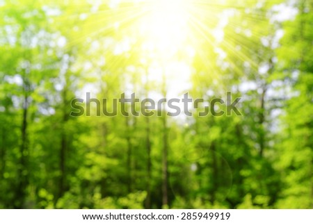 Green bokeh in the forest with sunshine. Nature abstract background. - stock photo