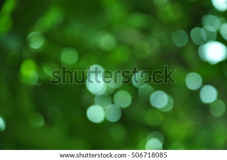 Green bokeh in the nature.