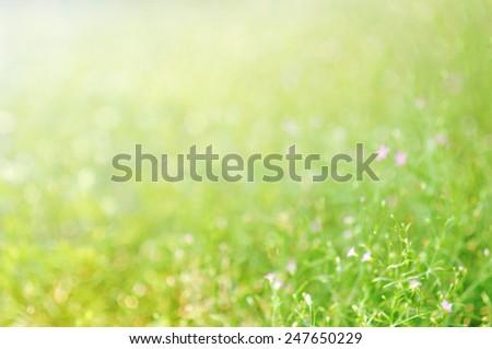 green  bokeh soft light blur background - stock photo