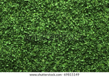 green box hedge background with green leaves - stock photo