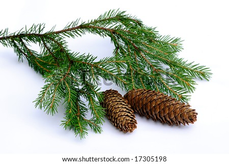 green branch fir tree with pinecone isolated - stock photo