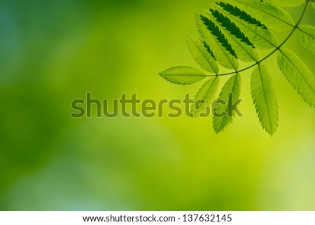 Green branch in a forest