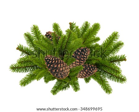 green branch of Christmas tree with cones isolated on white - stock photo