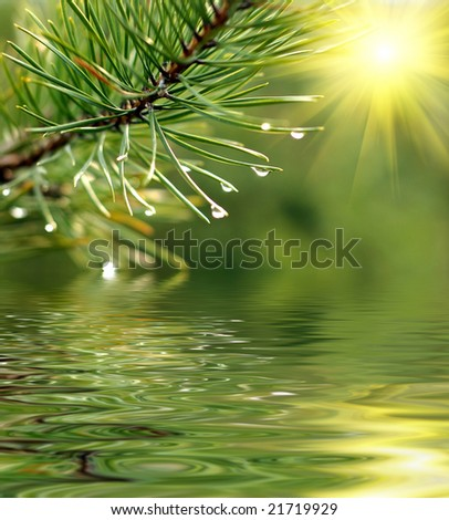 Green branch of pine-tree reflected in the water - stock photo