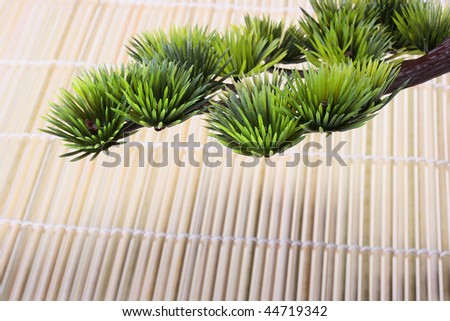Green branch of the Japanese pine against a bamboo laying. - stock photo