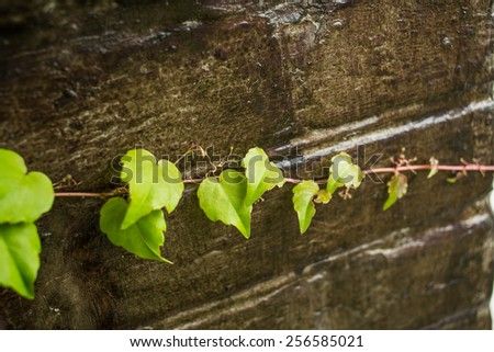 Green branch over dark wooden background. selective focus on center green leaf - stock photo