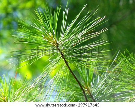 Green branch pine in green background - stock photo