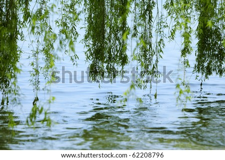 Green branches of a willow on the water.