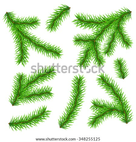 Green branches of Christmas tree on white background