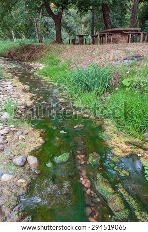 green brook with musk  - stock photo