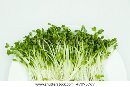 green buds on dish - stock photo