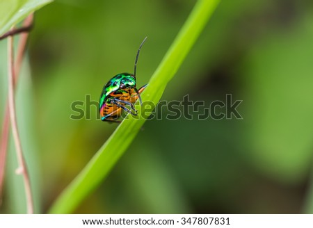 green bug on grass