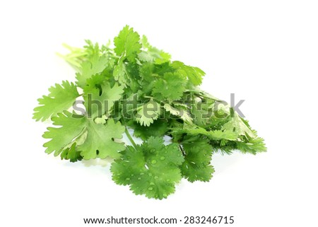 green bunch of coriander on a light background - stock photo