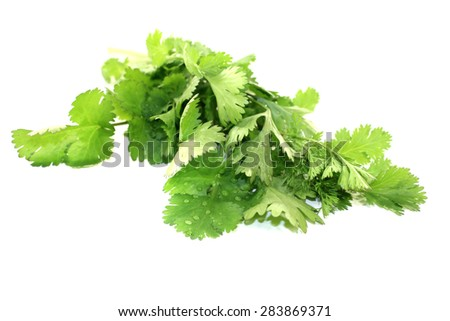 green bunch of coriander on a light background