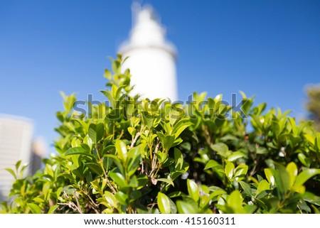 Green bush against the blue sky - stock photo