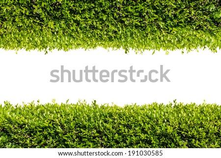 Green bush frame. Line of green bush. - stock photo