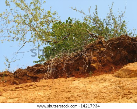 green bush growing on a clay hill