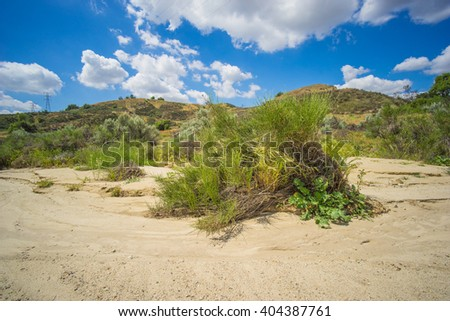Green bush grows in the sand of a dry riverbed in the desert of the American southwest.