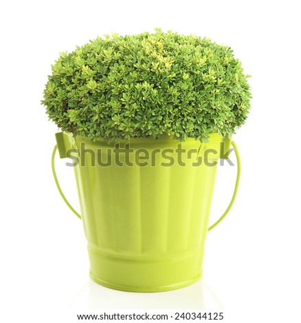 Green bush in metal bucket isolated on white - stock photo