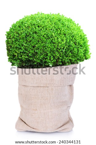 Green bush in sackcloth bag isolated on white - stock photo