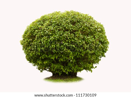 Green bush on a white background - stock photo