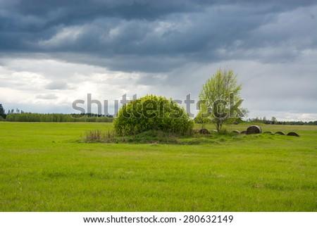 Green bush with blue sky - stock photo