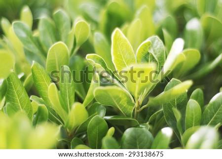 Green Bush with bokeh - stock photo