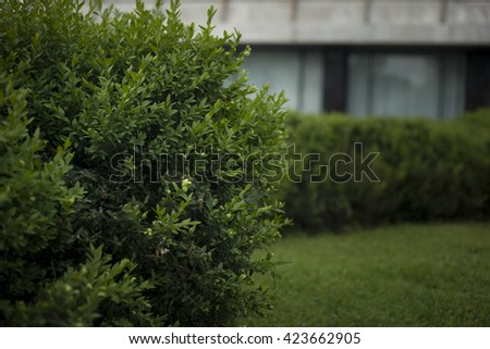 Green bush with leaves close-up.