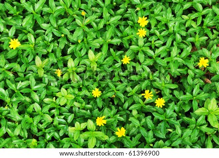 Green bush with yellow flower - stock photo
