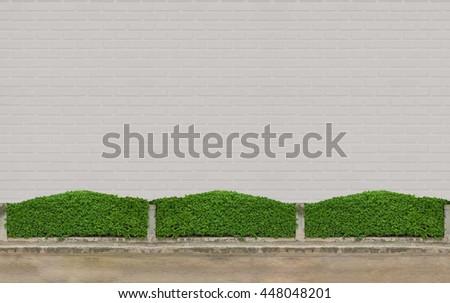 Green Bushes fences at white brick concrete wall  floor at walk way  - stock photo