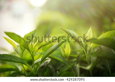 Green bushes foliage outdoors.