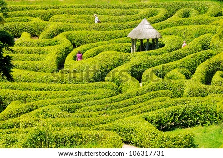 Green bushes labyrinth, hedge maze. People search the exit - stock photo