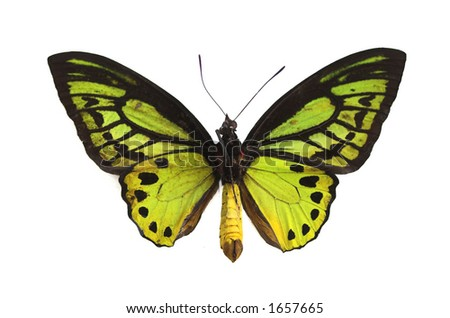 Green butterfly isolated on a white background - stock photo