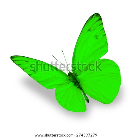 green butterfly isolated on white background - stock photo