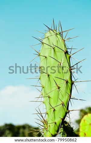 Green Cactus - stock photo