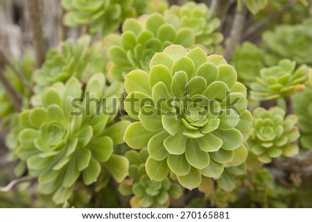 Green Cactus Flower Nature Background