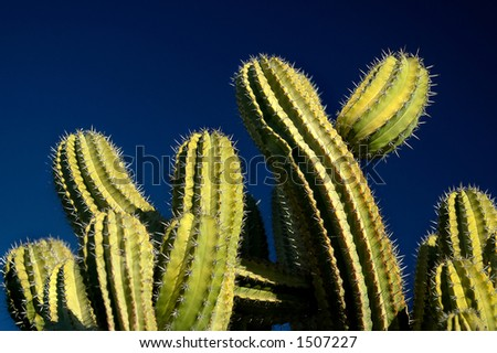Green Cactus on Blue Sky - stock photo