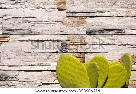 Green Cactus on white Wall Stones / Detail of old cactus on a white and brown stone wall - stock photo