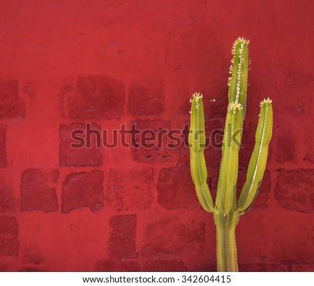 Green Cactus over red wall, Santa Catalina Monastery, Arequipa, Peru - stock photo