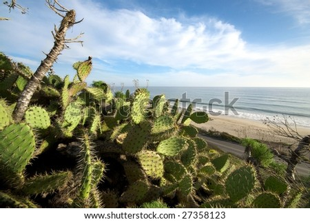 Green cactus plants sit in the foreground against the backdrop of a beautiful california beach