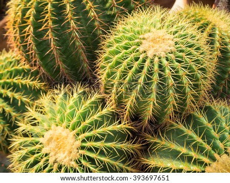 Green cactus with yellow thorn in cultivation bowl background - stock photo