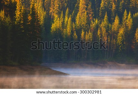 green calm forest near fogy lake at the sunrise - stock photo