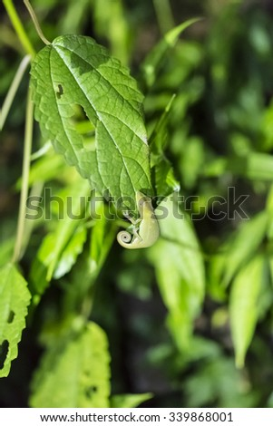 Green camouflage night chameleon in Madagascar - stock photo