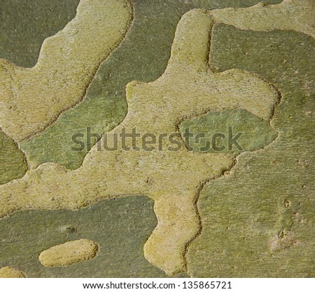 Green camouflage - sycamore bark background. - stock photo